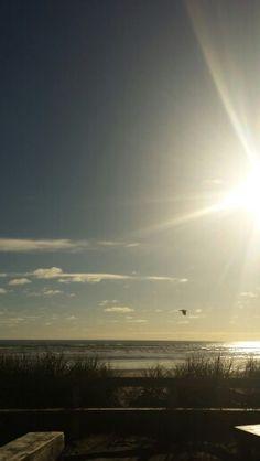 #beach #sun #bird  #newzealandbeach #foxton