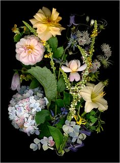 Pauline Runkle's Garden Bouquet - Multicolored Bouquets and Floral Collections - Scanner Photography By Ellen Hoverkamp
