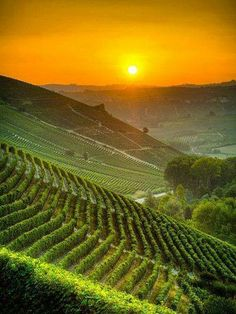 Sun rises in Italian vineyards