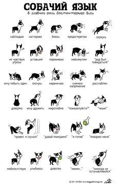 О чем думают ваши питомцы: язык тела животных в наглядных картинках