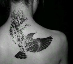 Wonder if I could get something like this but with an owl instead of a black bird.