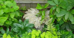 A couple of weeks ago, a friend and I learned how to make concrete leaf castings to put in our gardens. Our instructor was Roberta Palmer...