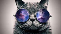 Go Back > Images For > Hipster Cat Galaxy