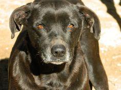 Adoption Moyen chien Senior - Galgos France - Lot-et-Garonne - Chien croisé moyenne race - SecondeChance.org