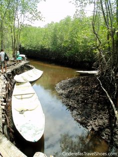 Mangrove forest in Lembongan, Indonesia