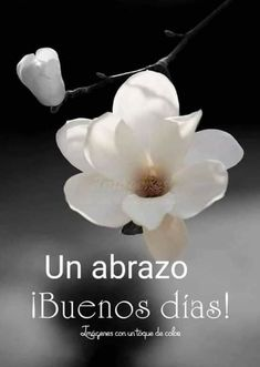 Looking for for images for good morning images?Check this out for very best good morning images ideas. These unique quotes will brighten your day. Good Morning In Spanish, Good Morning For Him, Good Morning Funny, Good Morning Greetings, Good Morning Images, Morning Love Quotes, Good Day Quotes, Good Day Messages, Little Girl Pictures