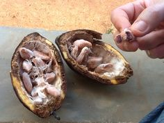 Coco beans - pure chocolate - in Balaclava, St Elizabeth Parish, Jamaica
