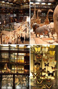 Musee d'Histoire Naturelle  57 Rue Cuvier, 75005 Paris, Frankreich  Tel: +33 1 40 79 30 00  http://www.mnhn.fr/le-museum/