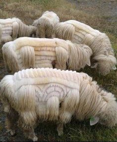 Sheep  with Style