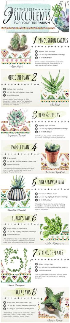 The best succulents to use in a terrarium.