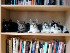 Kittens shelf ! http://sulia.com/channel/animals/f/75645a3e-8036-40c6-860d-5aa3cfd1ec44/?source=pin&action=share&btn=small&form_factor=mobile&pinner=125445363