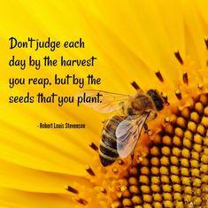 Robert Louis Stevenson Quote on a sunflower with a bee Quotable Quotes, True Quotes, Robert Louis Stevenson Quotes, Seed Quotes, Bible Quotes, Sunflower Quotes, Sunflower Pictures, Happy Quotes Inspirational, Garden Quotes
