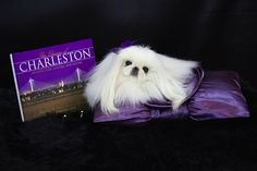 """A stunning photo from the pages of """"Diva Pearl the Pekingese"""" available on Amazon"""