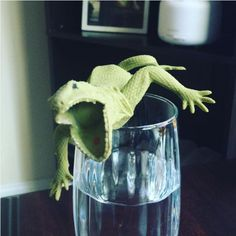 """This heart-stopping """"plastic lizard on a water glass"""" prank. Water Glass, Pranks, Hilarious, Funny, Parrot, Pets, Effort, Budget, Nice"""