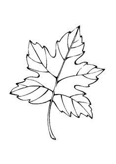 Image d une feuille faisant penser une toile colorier coloriages de fleurs et nature - Dessin d une feuille ...