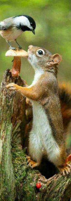 Is this too cute?  Looks like Mr. Squirrel is meeting Mr. Birdie