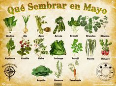 Que sembrar en abril / What to plant in April Eco Garden, Garden Deco, Garden Plants, Edible Garden, Organic Farming, Organic Gardening, Urban Farmer, Green Life, Growing Vegetables