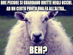 Imparare l'italiano con le barzellette sugli animali