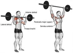 The barbell overhead press targets your anterior deltoid. Your lateral deltoid, upper pectoralis major, triceps brachii, and trapezius act as synergists. Fitness Workouts, Weight Training Workouts, Gym Workout Tips, Workout Regimen, Fun Workouts, Training Exercises, Body Workouts, Barbell Shoulder Press, Shoulder Muscles