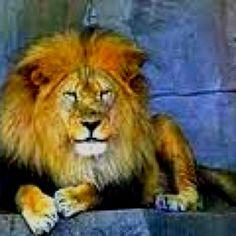 The roar! #malmaisongiveaway