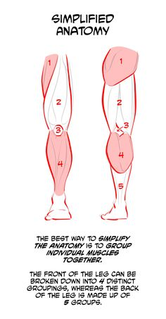 How to Draw Legs Anatomy Art, Human Anatomy, Legs, Drawings, Sketches, Human Body Anatomy, Artistic Anatomy, Drawing, Portrait
