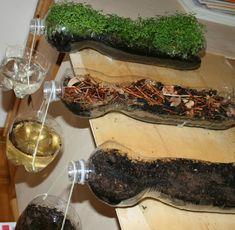 20 actividades para trabajar la naturaleza - experimentos - importancia de las plantas al filtrar el agua