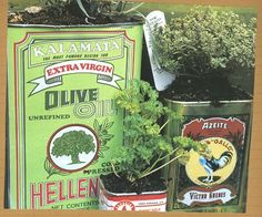 Plant a Mediterranean theme garden with olive oil, tomato paste, and other Greek/Italian specialty food cans.  #gardens #themegardens #creative #crafts #herbs