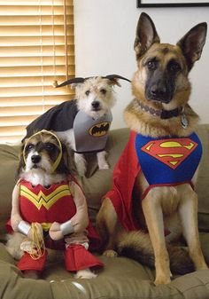 "Cats And Dogs Get Ready For ""The Dark Knight Rises"""
