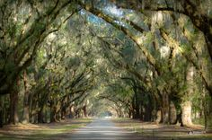 THE LIVE OAK ROAD by RomanDA Photography on 500px | Wormsloe Plantation, Georgia State Park | Looking down the long road under the amazing looking Live Oaks covered in Spanish Moss