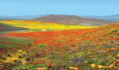 California Poppy, Southern California, Antelope Valley Poppy Reserve, Motorhome Travels, Great Basin, Mojave Desert, Poppies, Travel Inspiration, Places To Visit
