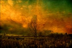 A Fen Study - Part 4  (photograph)     Images © 2000 - 2012 Stuart Lee.