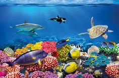 Amazon.com - Undersea Coral Reef Photo Wall Paper - Aquarium Fish Sea Mural - Xxl Undersea Underwater World Wall Decoration -