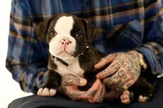 Almost makes me want one - A puppy, not a sleeve.