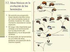 1.3.1.- ANTROPOIDEOS: HOMÍNIDOS