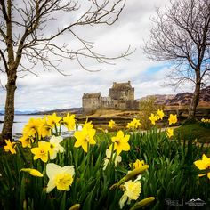 Colorful Spring Blooms, Eilean Donan Castle, Scotland.