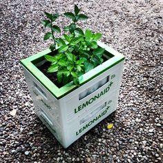 Gartenkiste_Lemonaid