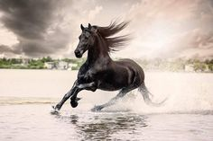 (93) Horses & Freedom - horse running through the water.