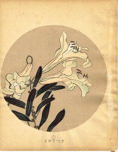 """Japanese antique woodblock print Ito Jakuchu """"Lilium japonicum from Jakuchu gafu"""""""