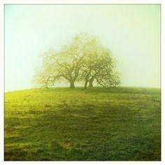 God I love trees!!!!!
