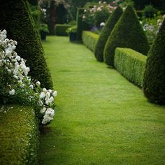 """Down the highly manicured garden path with iceberg roses to soften the edges in the Jardin d'Angélique. Normandy, France. #jardin #garden #gardenpath…"""