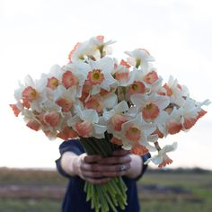 Narcissus 'Pink Charm' This stunning variety has ivory petals and a delicate peachy-pink throat. Flowers For You, Cut Flowers, Spring Flowers, Beautiful Flowers, Daffodil Bulbs, Daffodils, Daffodil Flowers, Tulips, Flower Farm