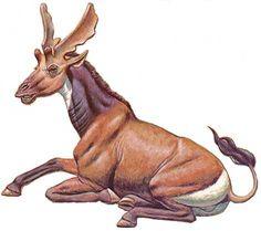 A moose-like ancestor of the giraffe.  Sivatherium | sivatherium pertencia ao grupo dos sivatheriuns parentes das atuais ...