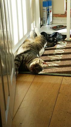 A new doormat