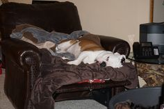 Stella reclining