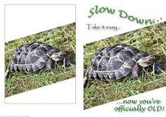Retirement 65th 60th Birthday Tortoise Card on Craftsuprint - Add To Basket!