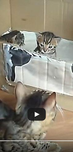 Adorable conversation d'une chatte avec son chaton.  http://rienquedugratuit.ca/videos/adorable-conversation-dune-chatte-avec-son-chaton/