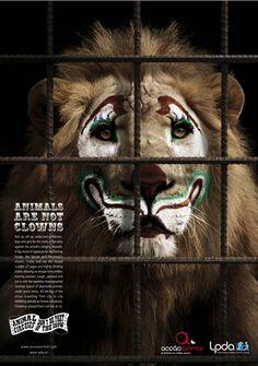 Los animales ¡NO SON PAYASOS! NON AUX ANIMAUX DANS LES CIRQUES . NON AUX MAQUILLAGES ET TENUES RIDICULES POUR LES ANIMAUX DANS LES CIRQUES