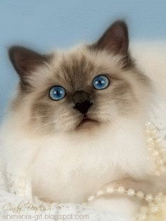 3D Gif Animations - Free download i love you images photo background screensaver e-cards: Animals pets, farm animals and zoo animals clipart animated gifs free downloas mobile screensaver ... Kitten Pet Cute Funny Humor animated gifs free ...
