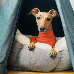 Im honestly not ready for sweater weather. Make it stop. Hiding out in my @growlergoods teepee until it's all over! #iggyjoey