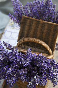 Lavanda pode ser usada no buquê e na decoração do casamento